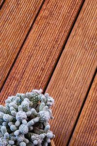 Deck terasa lemn exotic